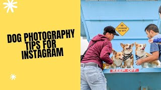 WAYS TO TAKE PICTURES OF YOUR CANINE FOR INSTAGRAM (TIPS & TRICKS)